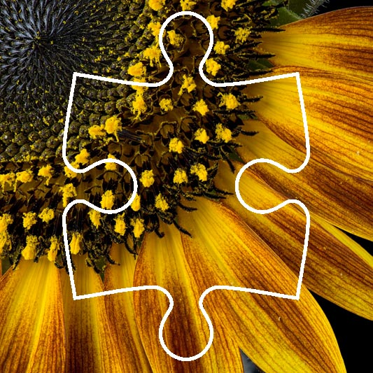 Puzzle: sunflower
