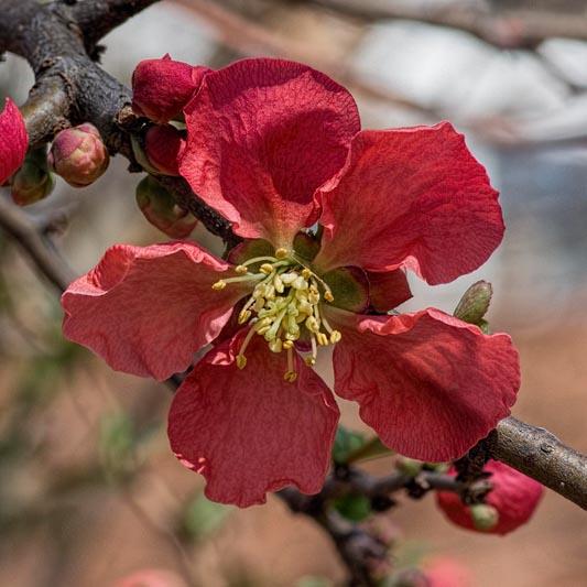 Botanica, March 17