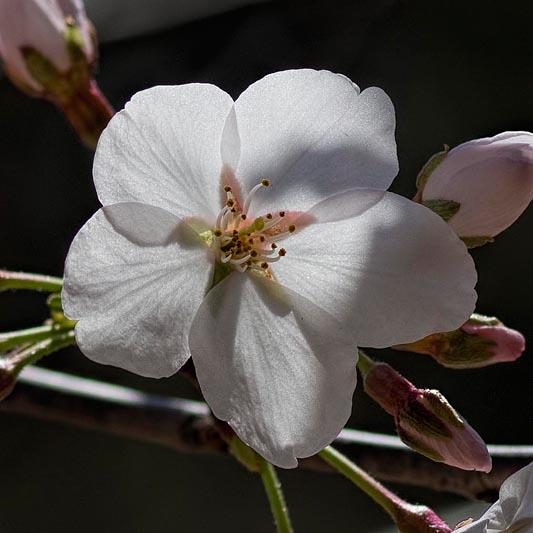 Botanica, March 30