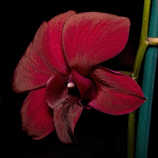 Orchid Show, November 3-4, 2018 IV