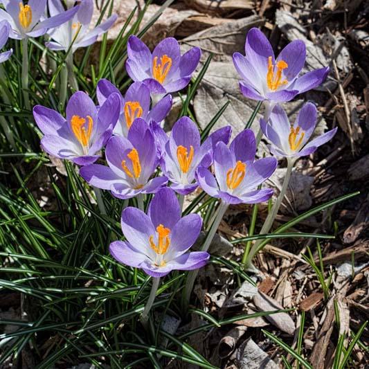 Botanica, March 16